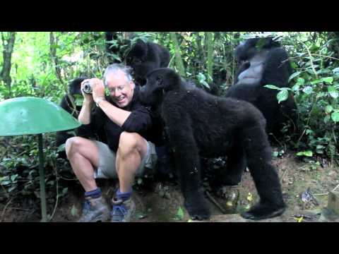 A man meets a family of mountain gorillas in the forest of Uganda