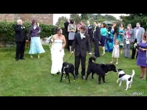 Dog Pees On Weeding Dress