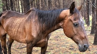 150 horses rescued from Texas property by The Humane Society of the United States