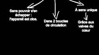La Circulation Sanguine 3 : Comment Le Sang Circule ?