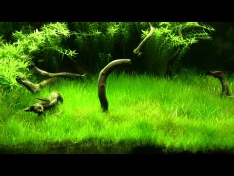 Get Free High Quality HD Wallpapers Aquascape Plants List