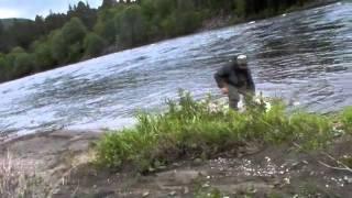 Laksevideo fra Orkla i 2016
