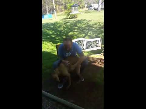 Dog doesn't recognize owner until he sniffs him.