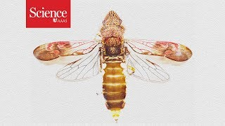 9. Sharpshooter insect pees faster than a cheetah accelerates