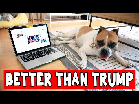 9 THINGS MY DOG DOES BETTER THAN TRUMP // Grace Helbig