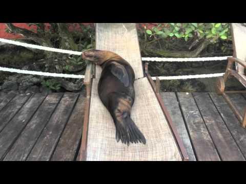 攝影師外出拍海獅 卻意外錄下情侶在做害羞的事!