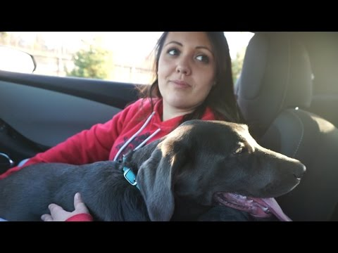 Video DOG PARK WITH TINA AND STORM! download in MP3, 3GP, MP4, WEBM, AVI, FLV January 2017