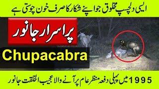 Chupacabra In Real Life - Amazing Animal - Purisrar Dunya Urdu Documentaries