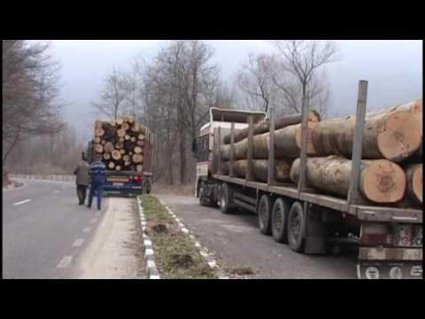 Radarul pădurii a mai tăiat din avântul infractorilor in Caras Severin