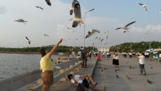 Samut Prakan Thailand  City new picture : Bang Poo - Samut Prakan Bird Beach Thailand