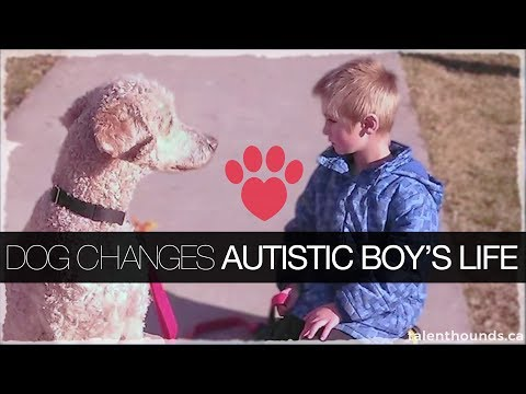 Autism Service Dog makes boy's life better