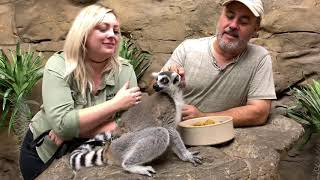 Safari Encounters with Sloth, Lemur, and Anteater by Prehistoric Pets TV