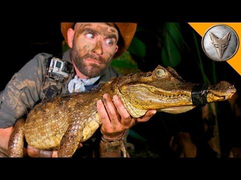 DANGEROUS Caiman Catch! (видео)