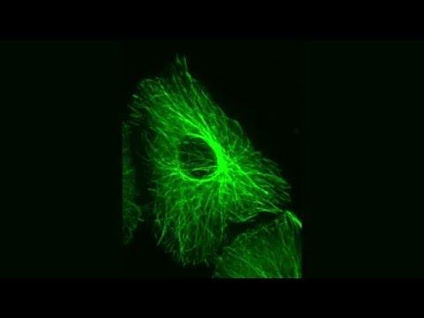 MEANS microscopy