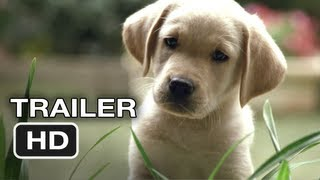Quill The Life Of A Guide Dog Official Trailer 1 2012 HD Movie