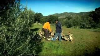 Ethical Foie Gras Report - Gordon Ramsay