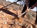 Prospecting for gold nuggets in central Australia, using a metal detector..