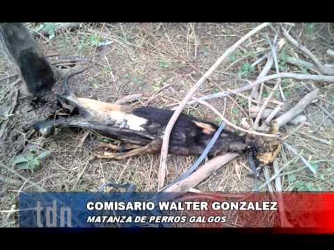 GALGOS – Crio. Gonzalez