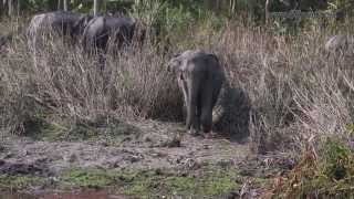 Kaziranga India  city pictures gallery : Wildlife of India, Kaziranga National Park, Assam India