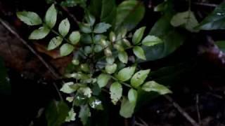 Nosy Mangabe• Madagascar