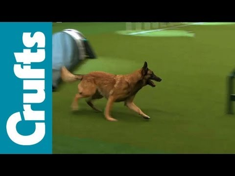 agility - Agility - Singles Final - Small, Medium and Large - Crufts 2012.
