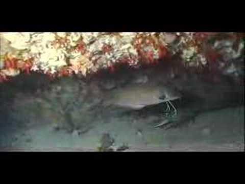 Mar de Alborán 2ª parte