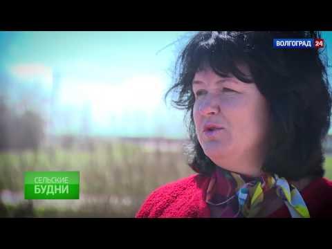 Солодча. Выпуск от 20.04.2017