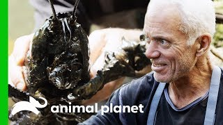 Catching Giant Crayfish In Tasmanian Rivers | Jeremy Wade's Dark Waters by Animal Planet