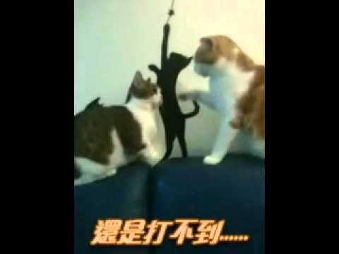 短腿貓的悲哀,我們不是說好不打臉的!