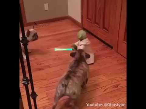 Luda borba dva mala psa i malog Jode