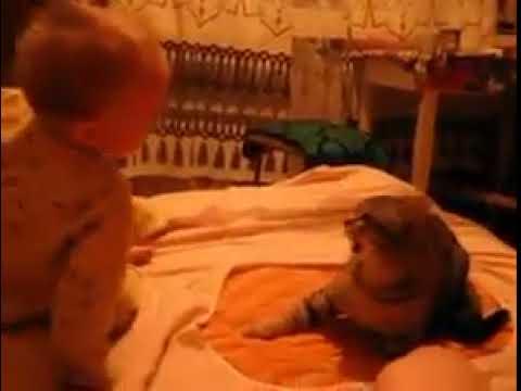 Płaczące dziecko z całej siły uderzyło kota! Reakcja zwierzęcia wywołała bardzo dużo kontrowersji!