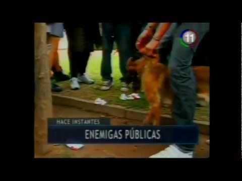 Alumnos en viaje de egresados dejan moribundo a perro en salta