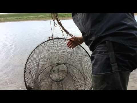 как ловить линей мордушкой