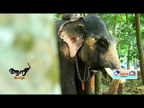 Video Amballur  Sivan  (  Aana Peruma  Episode - 13 ) download in MP3, 3GP, MP4, WEBM, AVI, FLV January 2017