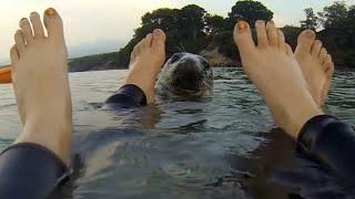 بالفيديو.. فقمة تجبر فريق زوارق على النزول للماء واللعب معها !