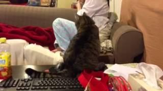 A persistent cat