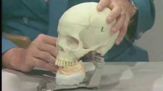 Articulator Demonstration