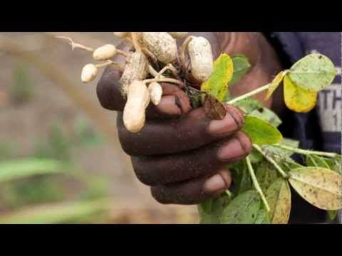 food system - Hunger is not about not having enough food. It's about inequalities in access to resources to grow food, it's about power and distribution. Women, make up th...