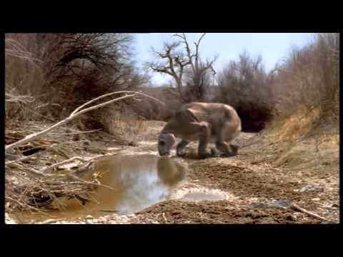 Jak se žilo paraceratheriu?