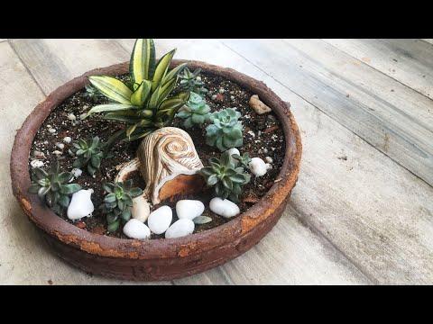 How to grow succulents and summer care // सुकुलेंट्स उगाना कैसे सीखे और इसकी देखभाल // Part 1
