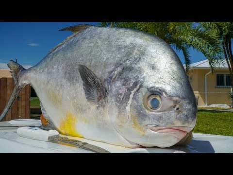 Florida Keys Permit- Catch Clean Cook (Bridge Fishing)