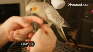 How to Hand Train a Bird