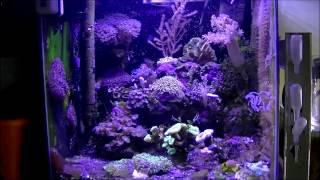 Krewetkarium Morskie - Reef Tank - 2h / 2min