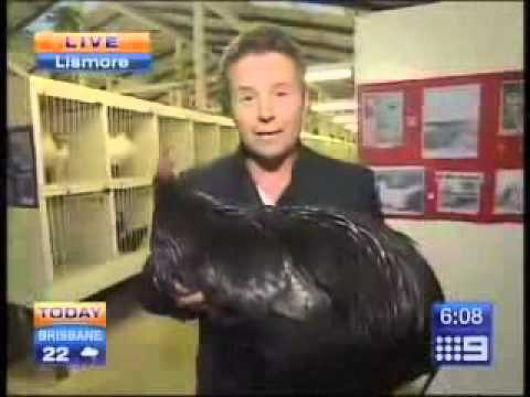 News reporter has the perfect response to being attacked by a chicken live on air