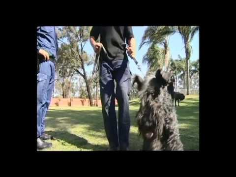 2007 Ethnic Business Awards Finalist – Small Business Category – Fred and Luanna Osmani – Guard Dog Training Centre
