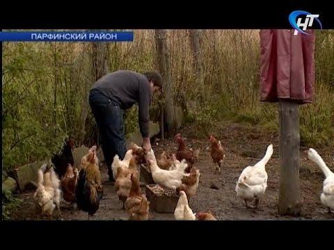 Фермер из Парфина участвует в проекте от компании Google и АСИ