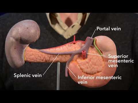 Pancreas (anatomy)