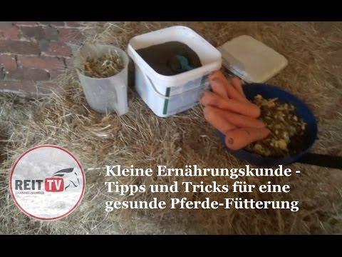 Kleine Ernährungskunde – Pferdefütterung leicht gemacht (Lucias Vlogs) REITTV