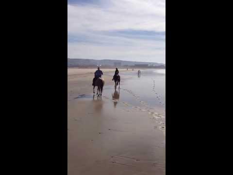 Horseback Riding On the Beach in San Diego