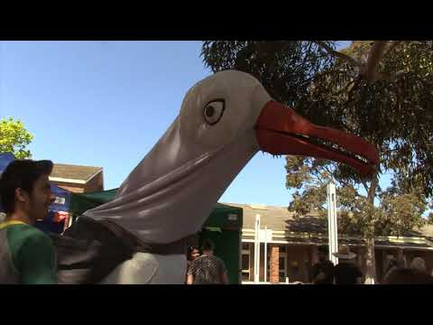 Fawkner Festa 2017 video